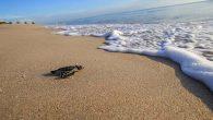 Hatay'ın Samandağ sahillerinden…