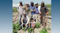 Hatay'da tarım işçisine 65 tl yevmiye