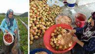 Tarım ve Gıda Sektöründe