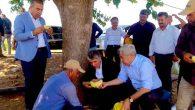 Yayman, Kırıkhan'da kavun hasadındaki çiftçileri ziyaret etti