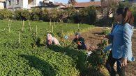 Kadın Vekil, Kadın Tarım İşçileriyle  Tarlada