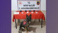 Jandarma operasyonunda